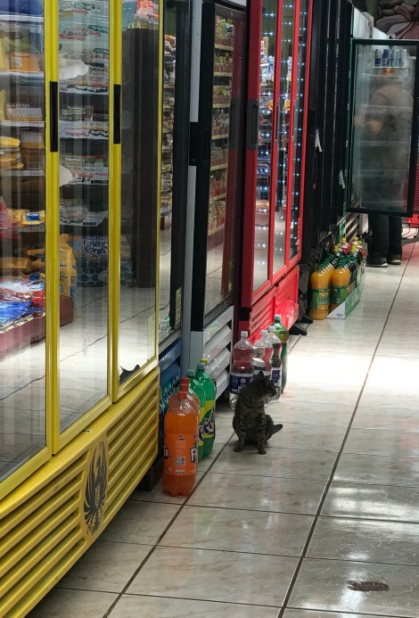cat in grocery store.jpg