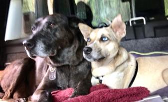 dogs in truck.jpg