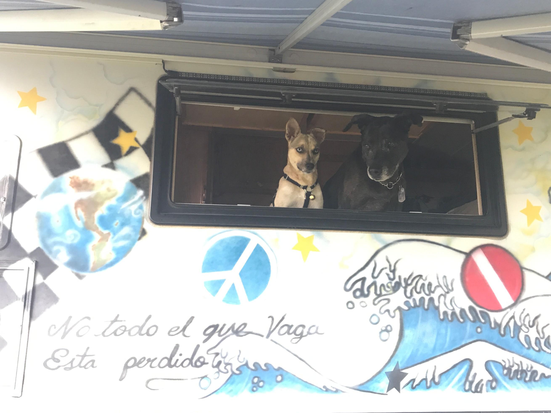 dogs in window.jpg