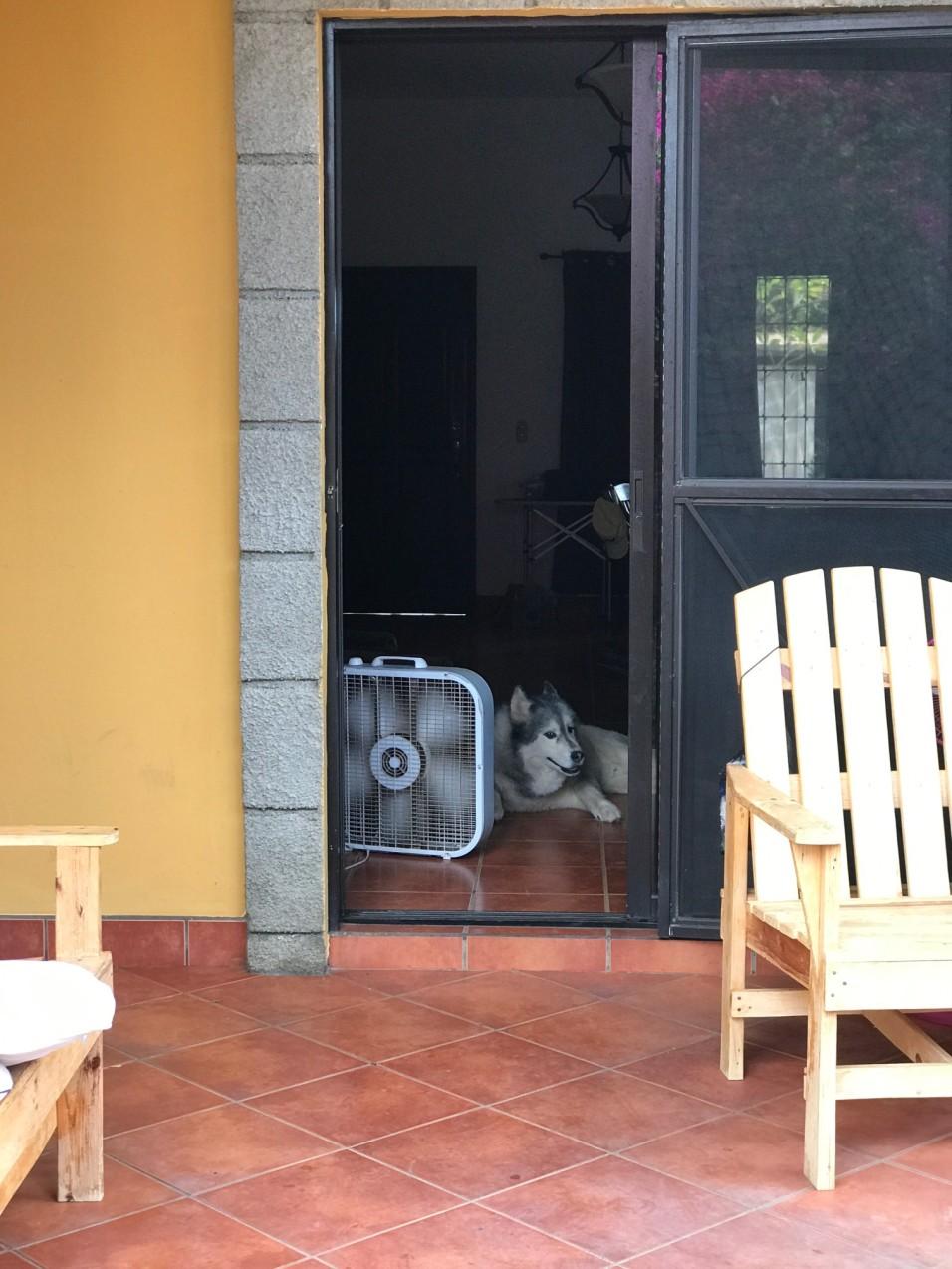 martin in the door.jpg
