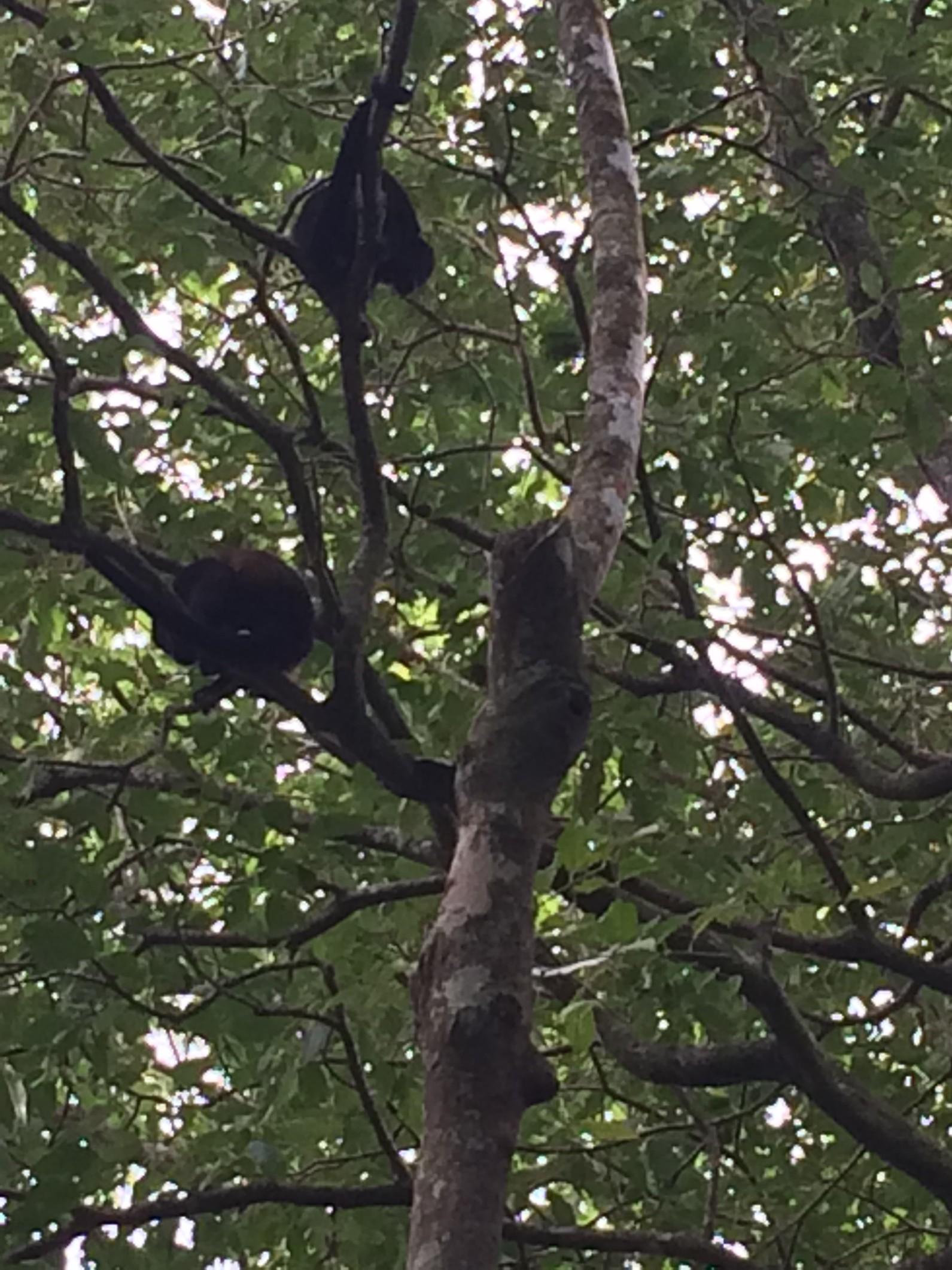 monkeys at camp.jpg