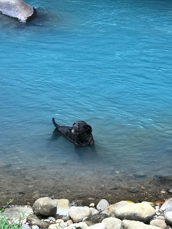 rio celeste zeb swimming2.jpg
