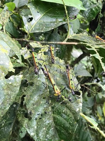 bugs on a leaf.jpg