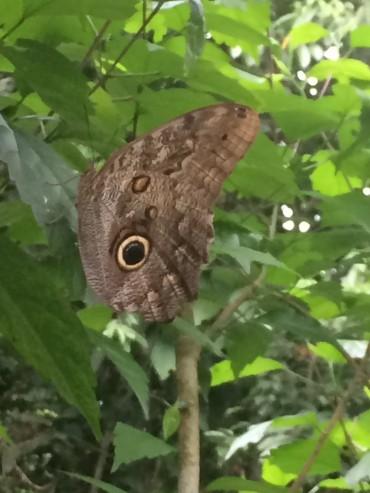buttefly in yard.jpg