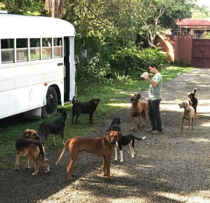 nomad dogs.jpg
