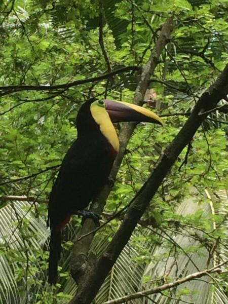 toucan in yard.jpg