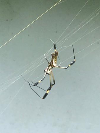 beautiful spider.jpg
