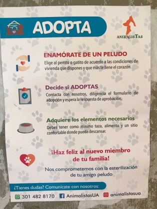 animal advocacy.jpg