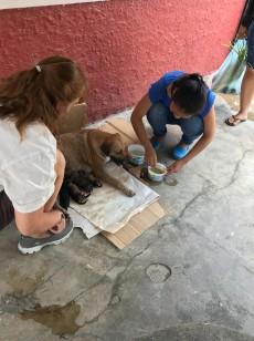 delivering puppies helper