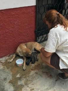 delivering puppies