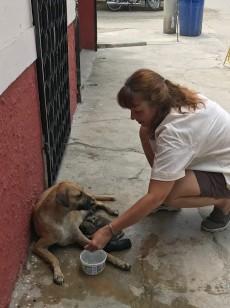 delivering puppies2