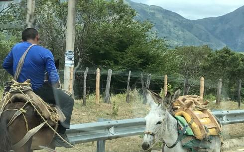 donkey driving on phone.jpg