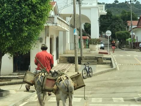 street scene donkey