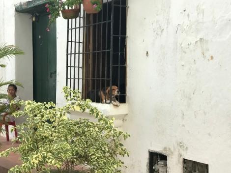 window dog 1