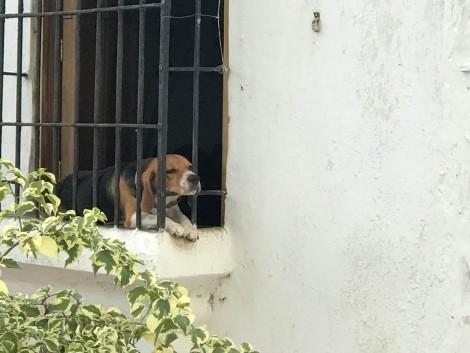 window dog 2