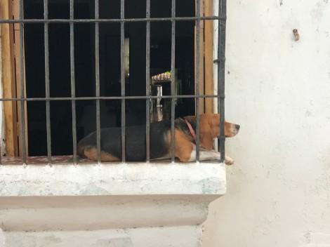 window dog 3