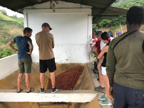 coffee beans raw vat