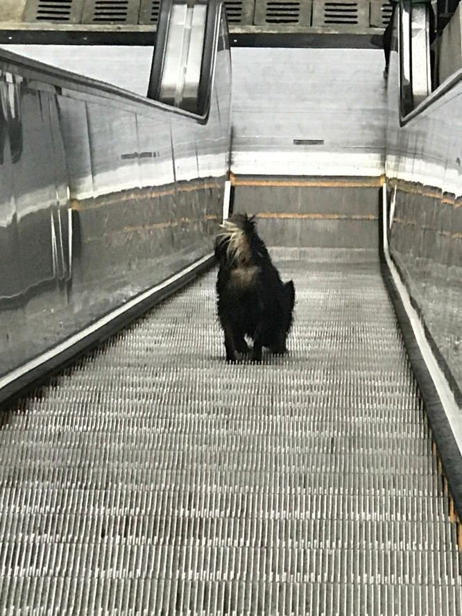 dog on escalator..jpg