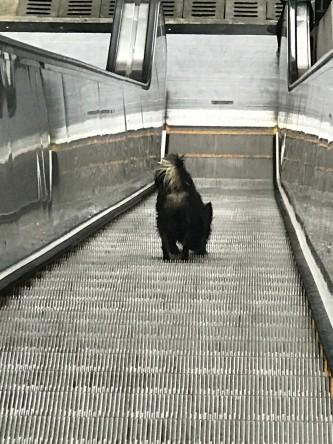 dog on escalator..jpg
