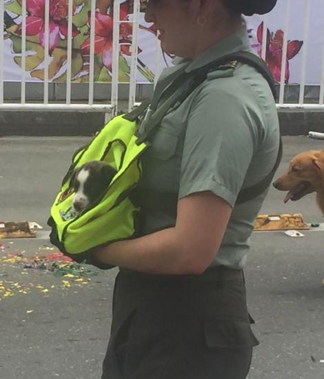 parade puppy
