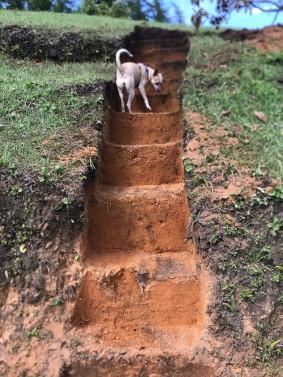 stairs at lake house