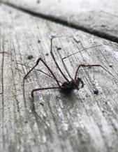 grotto spider.JPG