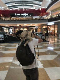 mall dog..jpg