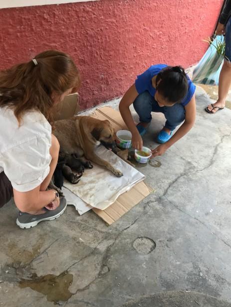 delivering puppies helper..jpg