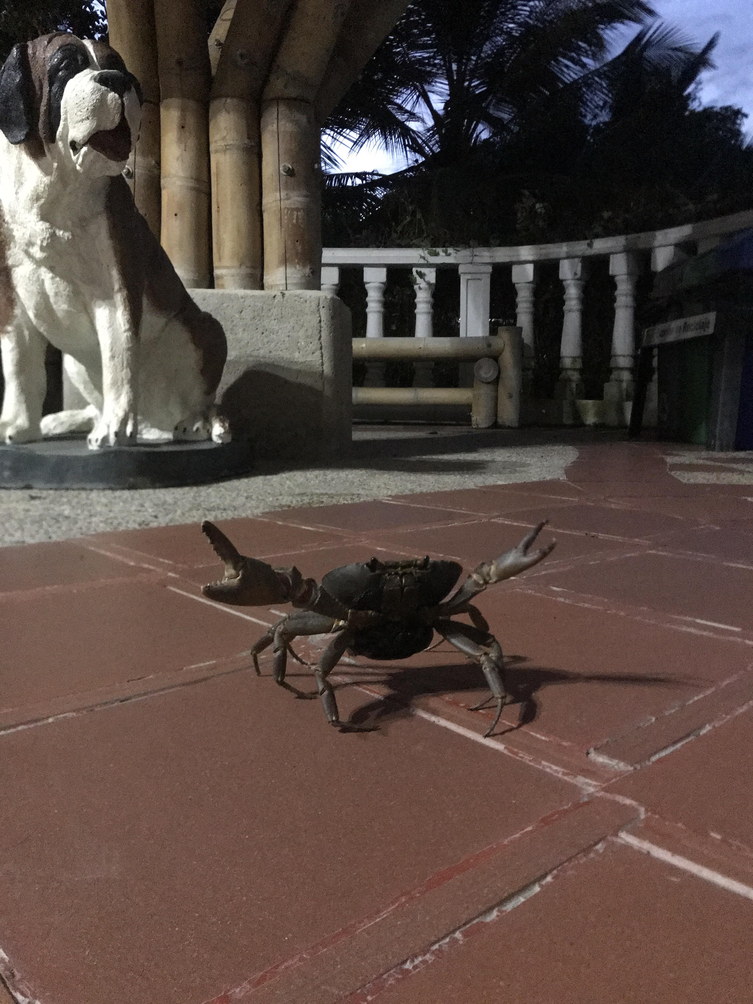 riverside crab