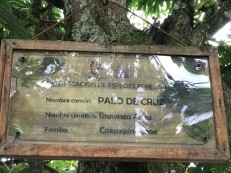 tenza labeled trees in park