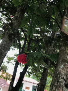 tenza tree with sign and bloom